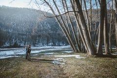 站立在洪水区域的远足者和敬佩高大的树木 免版税库存照片