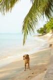 站立在海滩的狗在海边旁边 免版税库存图片