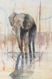 站立在湖的大象 库存照片