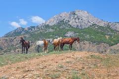 站立在灰色山附近的马 免版税库存照片