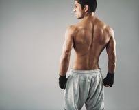 站立在灰色背景的肌肉年轻男性拳击手 免版税库存照片