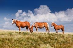站立在牧场地的小组三匹马 免版税图库摄影