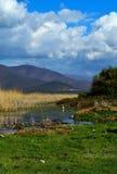 站立在的白鹭湖岸 库存图片