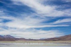 站立在盐水湖,玻利维亚的小组火鸟 免版税库存图片
