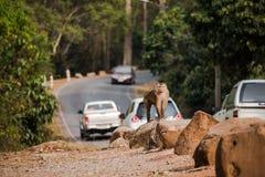 站立在石头的猴子 库存照片