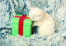 站立在礼物盒附近的小猫 免版税库存图片