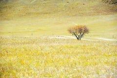 站立在秋天领域的偏僻的树 免版税图库摄影