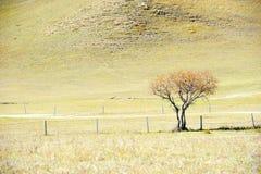 站立在秋天领域的偏僻的树 库存图片