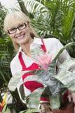 站立在花植物后的一名愉快的资深妇女的画象自温室 库存图片