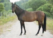 站立在草甸的马 免版税库存照片