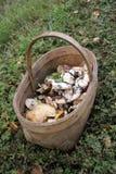 站立在草的狂放的蘑菇柳条筐在森林 免版税图库摄影