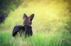 站立在草的狗 免版税库存图片