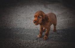 站立在街道上的好的矮小的哀伤的小狗 免版税库存图片