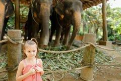 站立在被驯服的和被栓的大象附近的小俏丽的女孩 免版税库存图片
