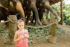 站立在被驯服的和被栓的大象附近的小愉快的女孩 免版税图库摄影