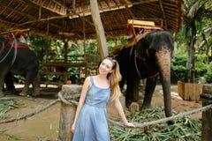 站立在被驯服的和被栓的大象附近的年轻白种人女孩 库存图片