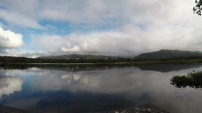 站立在路轨的海鸥飞行在池塘水 影视素材