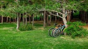 站立在道路的边的三辆自行车在森林健康生存概念的 免版税库存照片