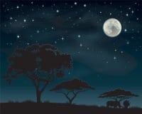非洲夜空 免版税库存图片