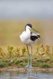 站立在银行的长嘴上弯的长脚鸟 免版税库存照片