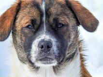 站立在雪的逗人喜爱的puppie 库存图片