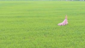 站立在领域的秀丽浪漫女孩 股票视频