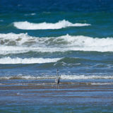 站立在水中的苍鹭看海洋 免版税图库摄影