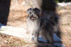 站立在阴影的逗人喜爱的狗 免版税库存图片