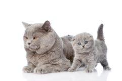站立在他的母亲附近的小的小猫 查出在白色 免版税库存照片