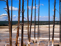 站立在黄石全国P内的温泉城的死的树 库存照片