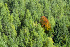 站立在绿色人群的秋天树 免版税库存照片