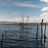 站立在Erhai湖的小树 免版税库存图片