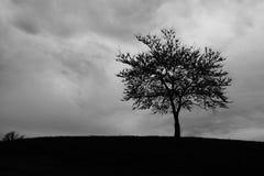站立多云风暴的树 免版税库存照片