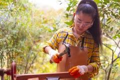 站立建造者的妇女佩带锤击在木的工地工作的被检查的衬衣工作者钉子 库存图片