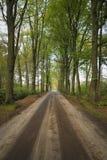 站立沿着土的绿色大橡木铺沙在森林风景的路 免版税库存照片