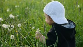 站立用在一个绿色领域的蒲公英的男婴在夏天 股票视频