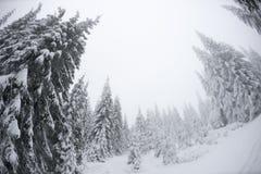 站立的圣诞树高在冬天 库存照片