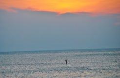 站立paddleboarding 库存图片