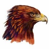 站起来接近的老鹰题头的立场 免版税库存图片