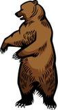站起来的棕熊 皇族释放例证