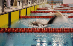 竞争游泳 库存照片