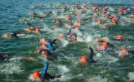 竞争者在开始三项全能的游泳阶段水中, 库存照片