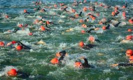 竞争者在开始三项全能的游泳阶段水中, 库存图片