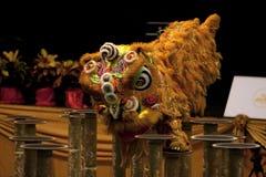 竞争舞蹈狮子 库存图片
