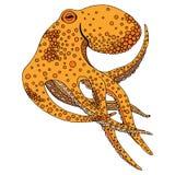 章鱼例证 库存照片