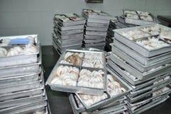章鱼原材料准备结冰在盘子在海鲜工厂在越南 库存图片