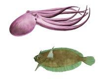 章鱼和比目鱼 库存照片
