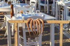 章鱼垂悬干燥 图库摄影