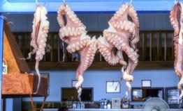 章鱼干燥在希腊 库存照片