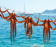 章鱼待售在餐馆 免版税图库摄影